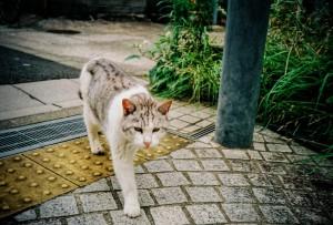 猫_000047 (4)
