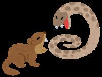habu_vs_mongoose