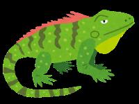 animal_iguana